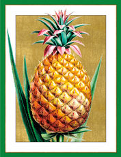 Pineapple Holiday Cards